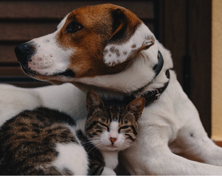 A cat and a dog snuggling together.
